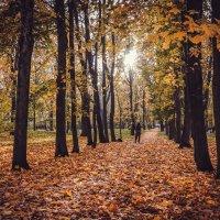 Осенний парк................... :: Александр Селезнев