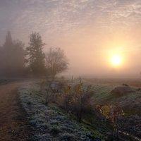 утро туманное... :: Elena Wymann