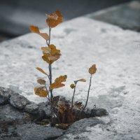 сквозь коробки бетона :: Милана Лесова