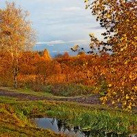 Золота осінь :: Людмила Левенець