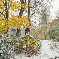 Снег в октябре 29 :: Виталий
