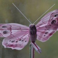 бабочка на трубочке. :: евген03 Левкович