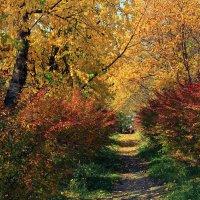 Осень золотая :: Валерий Павлов
