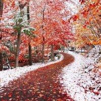 Осень, зима - всё смешалось :: Игорь Бойко