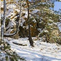 Белый снег... :: Галина Стрельченя