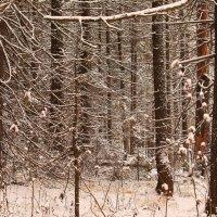 Ноябрь в лесу :: Татьяна Ломтева