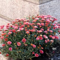 Сентябрь,хризантемы в городе... :: Тамара (st.tamara)