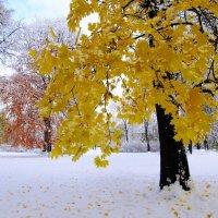 Ранний снег :: Александр Михайлов