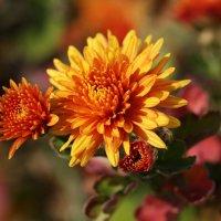 Последние цветы ноября :: Нилла Шарафан