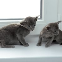 котятки :: Наталья Малкина