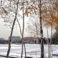 6 ноября - ЗИМА! :: Larisa Ereshchenko