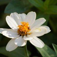 Цветок :: Фазлиддин Инагамов