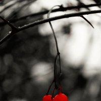 Калина красная.. :: Лариса Журавлева