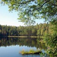 Лесное озеро :: Вера Щукина