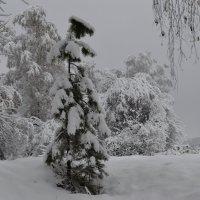 Маленькой елочке  холодно в лесу :: Tatiana Lesnykh Лесных