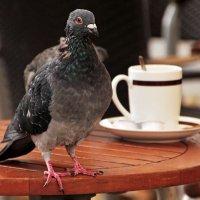 Желаете кофе ? :: Alexander