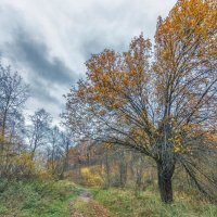 Осень :: Николай Андреев