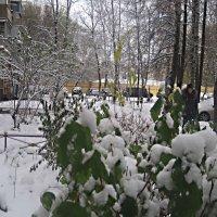 Начало ноября :: Елена Семигина