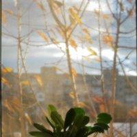 А из нашего окна... :: юрий иванов