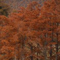 Осень на кипарисовом озере :: Ирина Рассветная