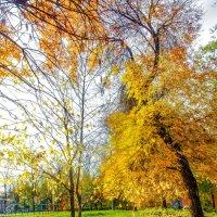 Осенний парк 2 :: Вячеслав Баширов