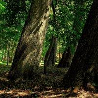 В тени старого парка. :: Laborant Григоров