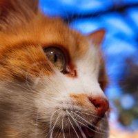 кот, который живет на дереве :: Анна Брацукова