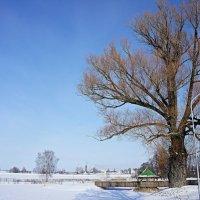 Дерево :: Елена Павлова (Смолова)