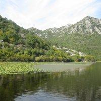 Скадарское озеро. :: Лариса (Phinikia) Двойникова