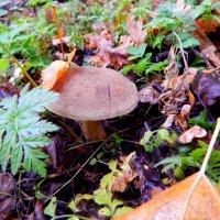 осенью по грибы :: Даша Щиголь