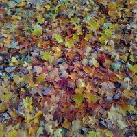 Осенние листочки :: Mariya laimite