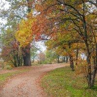 Осень в пасмурный день 4 :: Виталий