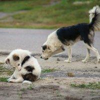 Собачья жизнь :: Вера Сафонова