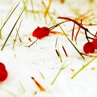 Ягоды на снегу :: Лариса Журавлева