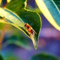 Под лучиком тепла моя весенняя пчела :: Александра Черных