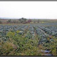 осень.  урожай. :: Ivana