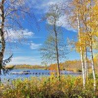 Лесное озеро :: Валерий Талашов