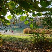 Осень … :: Galina Dzubina