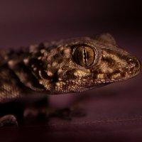 Reptile :: Армен Абгарян
