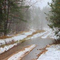 Диалоги снега и дождя... :: Лесо-Вед (Баранов)