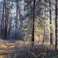 Осеннее мгновений серебро... :: Лесо-Вед (Баранов)