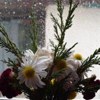 дождик :: Роза Бара