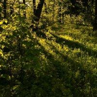 В весеннем лесу. :: ЭН КА
