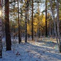 Ноябрьский день в лесу :: Евгений Карский