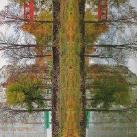 Ствол дерева! :: Марина Marina