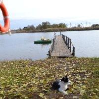Здесь кот живет :: Сергей