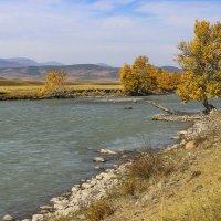 Течет река Чуя :: И.В.К. ))