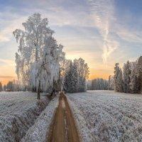 Прогулка по царству инея :: Фёдор. Лашков