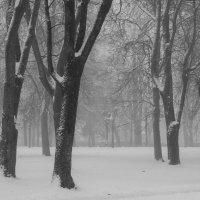 Погода :: Юрий Бондер