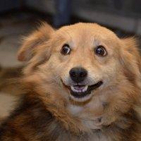 Собаки умеют улыбаться :: Александр Игнатьев